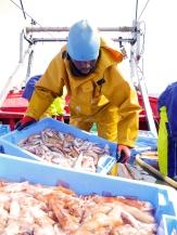 Reportaje sobre el trabajo de un barco pesquero de arrastre en el Golfo de Valencia.